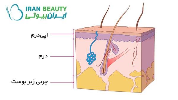 لایههای پوست